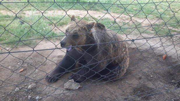 Bear in Korenica Zoo