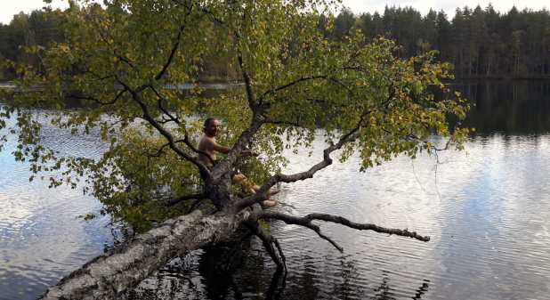 Climbing Tree Over Lake