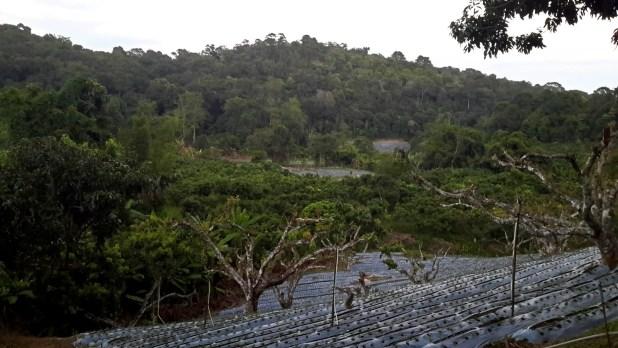 Doi Suthep Village Fields