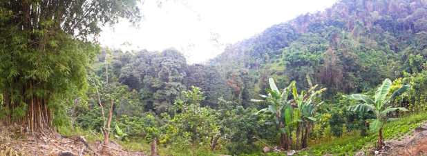 Doi Suthet Vegetation Panorama