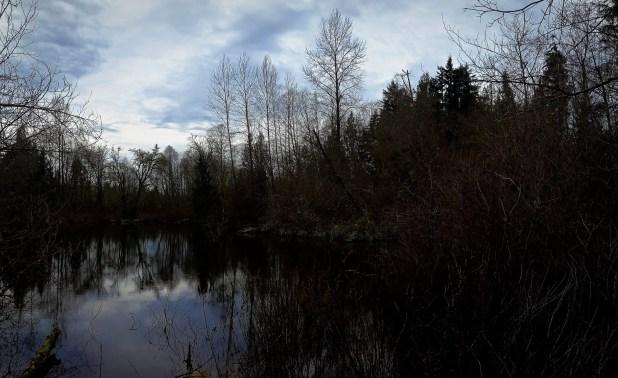 Brook Lake in West Hylebos Wetlands