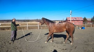 Selfie Training Horse #2