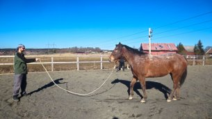 Selfie Training Horse #3