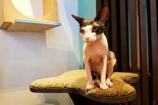 Maison de Moggy Cat Cafe