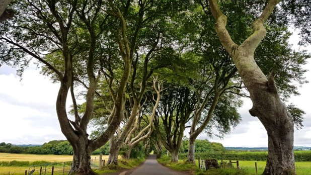 Dark Hedges aka King's Road