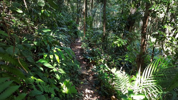 Kai Bae Waterfall Path