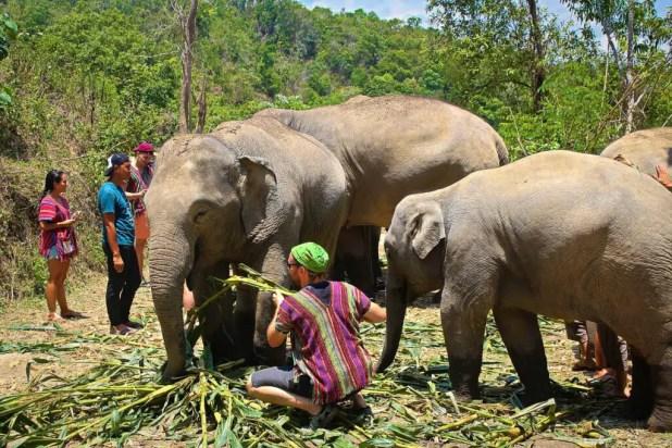 Selfie Feeding Elephants