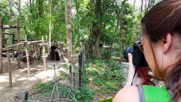 Bears at Kuang Si