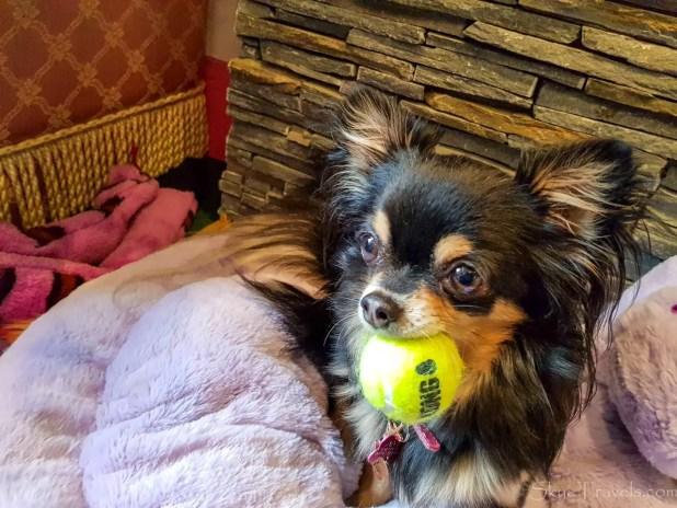 Ama at the Chihuahua Cafe