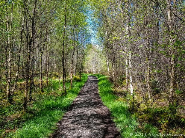 West Highland Way Through the Trees