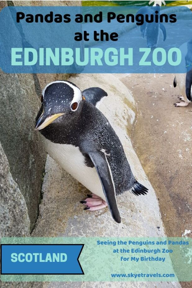 The Royal Zoological Society of Scotland is on the leading edge of aminal conservation, such as their work with the pandas at the Edinburgh Zoo. #EdinburghZoo #Pandas #VisitScotland #AnimalConservation #AnimalBreeding #Zoos #Edinburgh