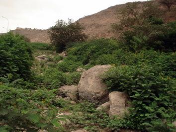 Jedna z wielu oaz w okolicach Salalah w Omanie