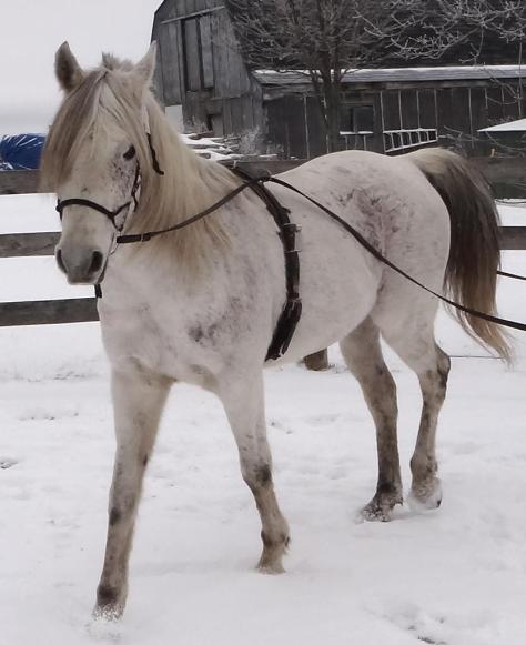 My gosh, I am a clever a horse!