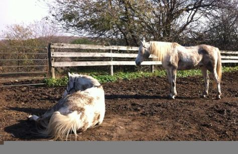 Grey horses. Perennially filthy.