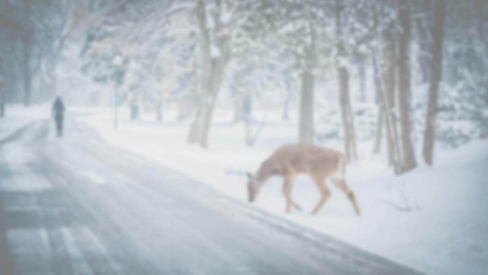 light_deer.jpg