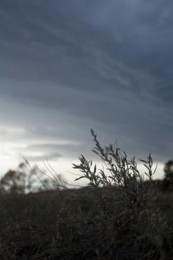 SABourne_montana_cloudcover