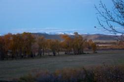 SABourne_montana_cottonwoods