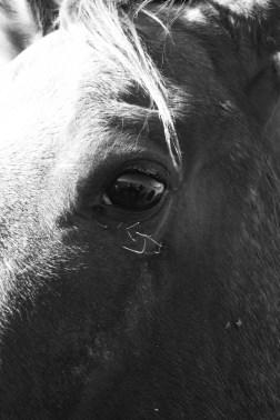 SABourne_montana_horseeye