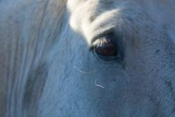 SABourne_montana_horses2