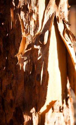 SABourne_montana_wood