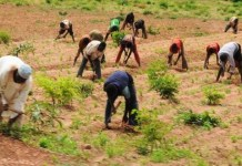Nigeria's Military taskforce, Peace Agency lauds NGO for engaging Journalists on farmer/herder
