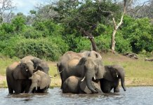 sky news africa 330 elephants in Botswana may have died from toxic algae