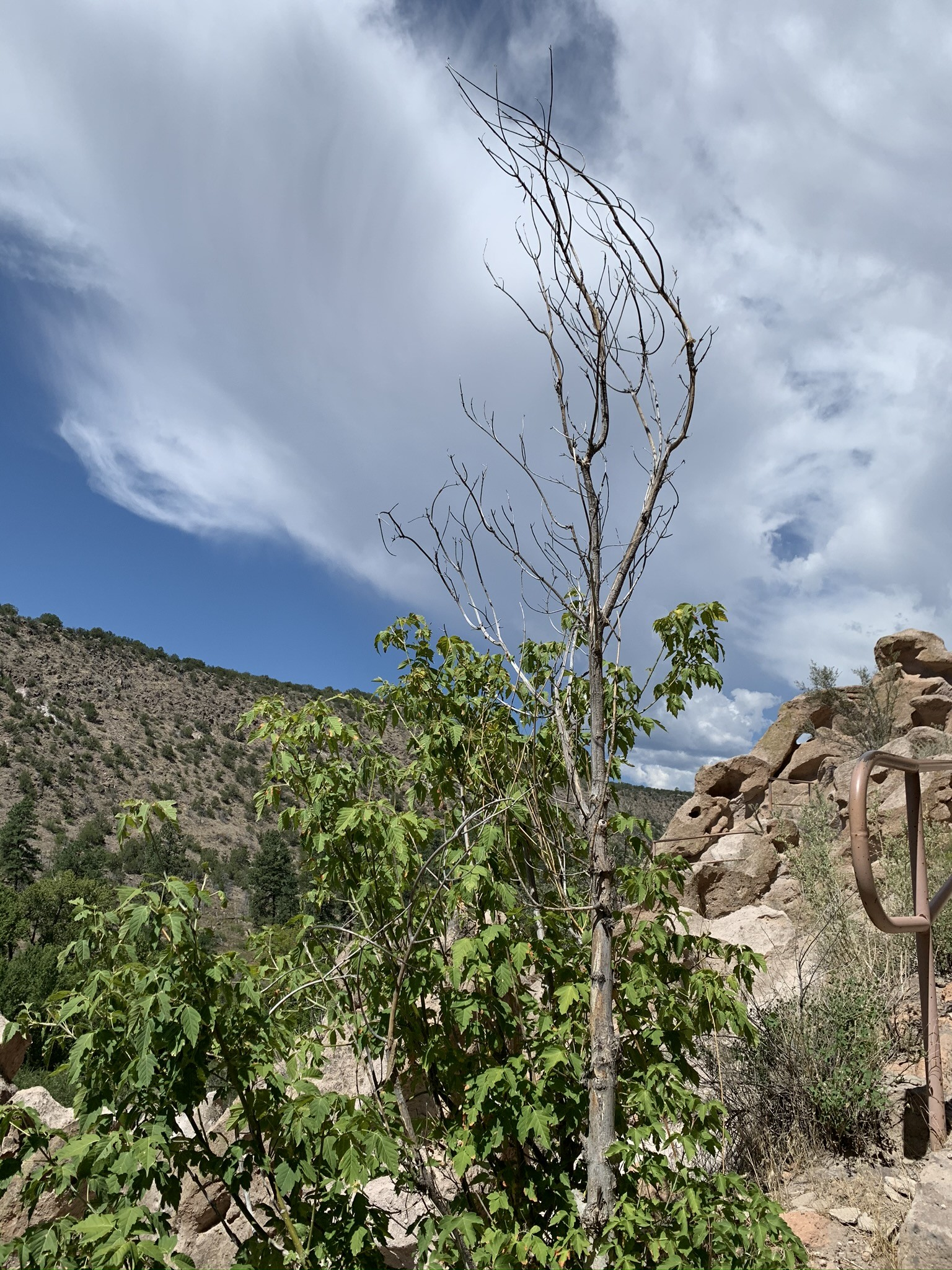 Hiking up to cliff dwellings II, Bandelier National Monument