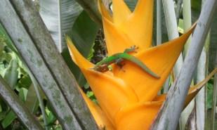 Gecko in Flower