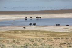 Antelope Island - UT