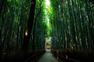 kyoto - Banbù Gigante