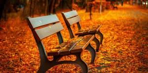Bænke i efterårsblade