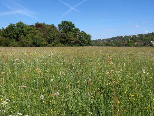 Artenreiches Grünland bei Dresden gefördert mit 204 €/ha