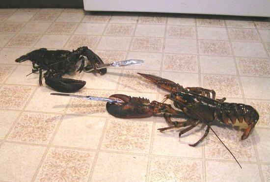 lobster-knife-fight