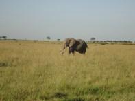Elephant on the Safari.