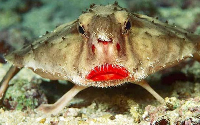 10 Funniest Looking Animals On Earth  Slapped Ham