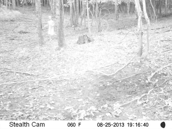 Un enfant aux yeux noirs pris dans une piste de cerf en Caroline du Nord - Des enfants effrayants aux yeux noirs capturés par une caméra