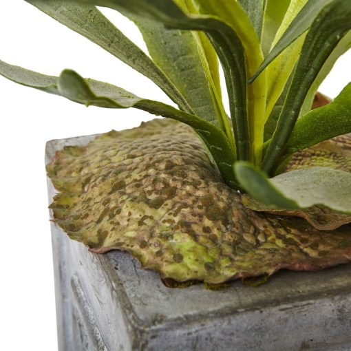 Nearly Natural 1457 Dancing Lady and Staghorn in Stone Planter