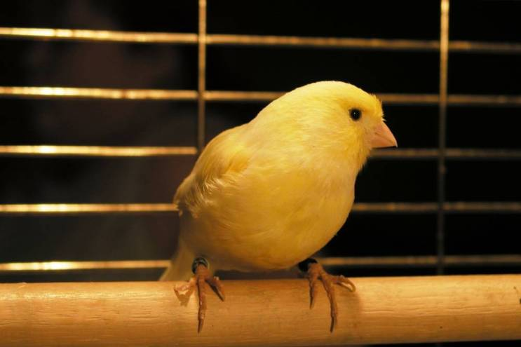 Is Transcription the Canary in the Translation Gold Mine?