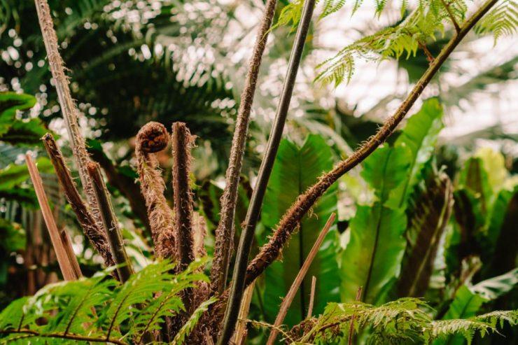 Tropski Vrt Prekmurje