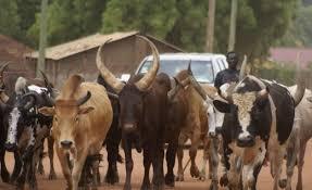 Herdsmen: High Court bans open grazing, Akeredolu rules effective tomorrow