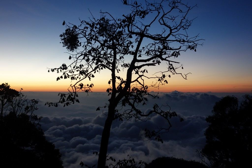 Horton Plains at dawn