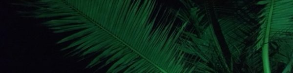 Green Palms at Night