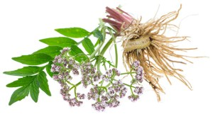 Valerian root effectiveness and safety