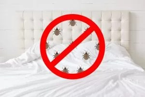 How to Save Mattress From Bed Bugs