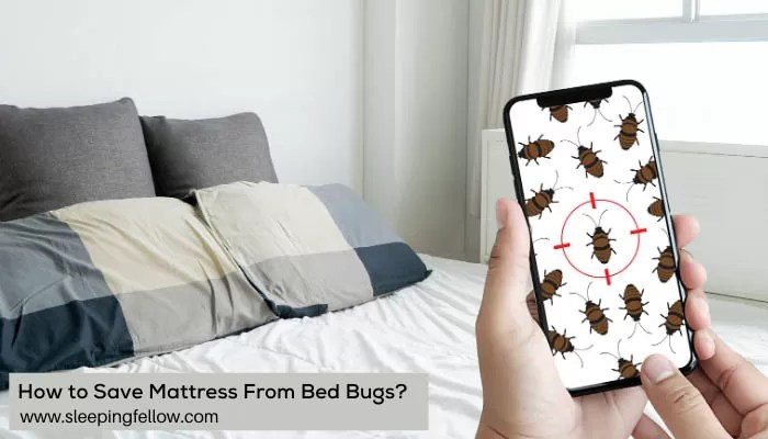 how-to-save-mattress-from-bed-bugs