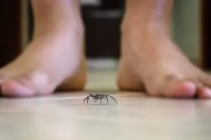 Things that attract spiders into the house
