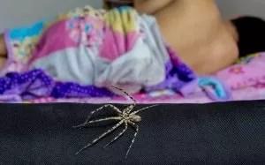 spiders away sleeping