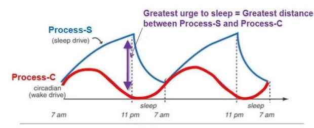 Image result for adenosine sleep