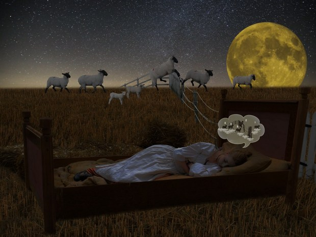 counting sheep insomnia sleepyhead central