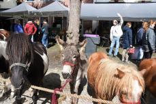 Paardenmarkt V'schoten (77)